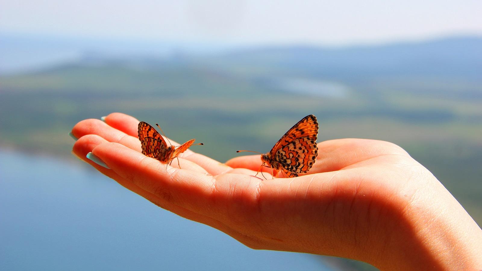Крыло бабочки - легкость и тепло Байкала...