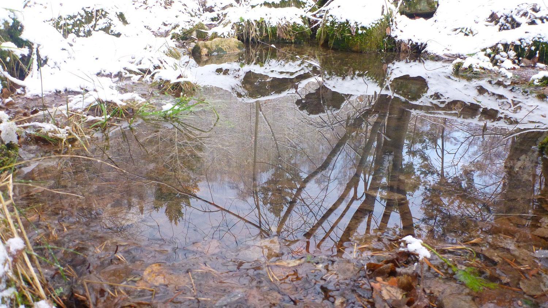 Отражение Затирлянья в воде
